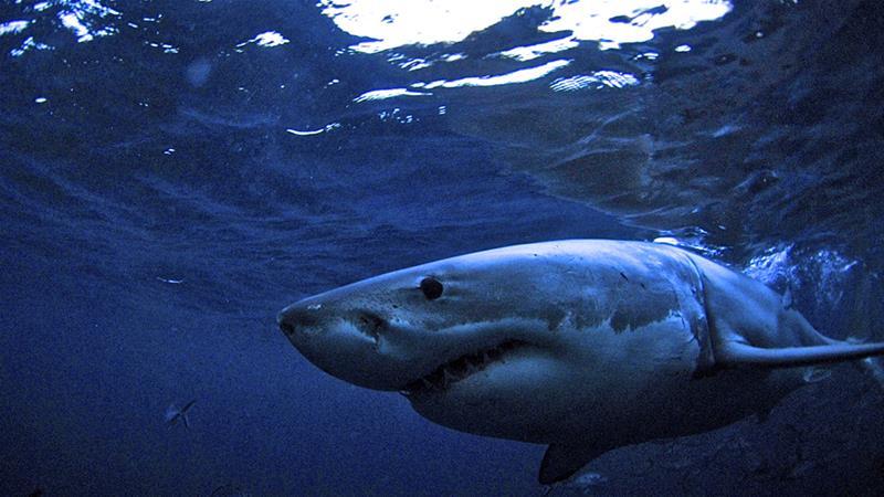 British tourist has foot bitten off in Whitsunday shark attack