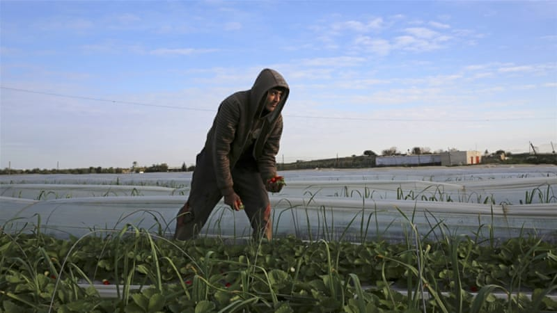 Israel spraying toxins over Palestinian crops in Gaza | News