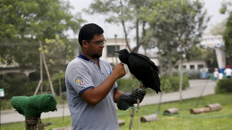 Trainer Victor Valdivia prepares a vulture for its forthcoming anti-littering mission [Mariana Bazo/Reuters]