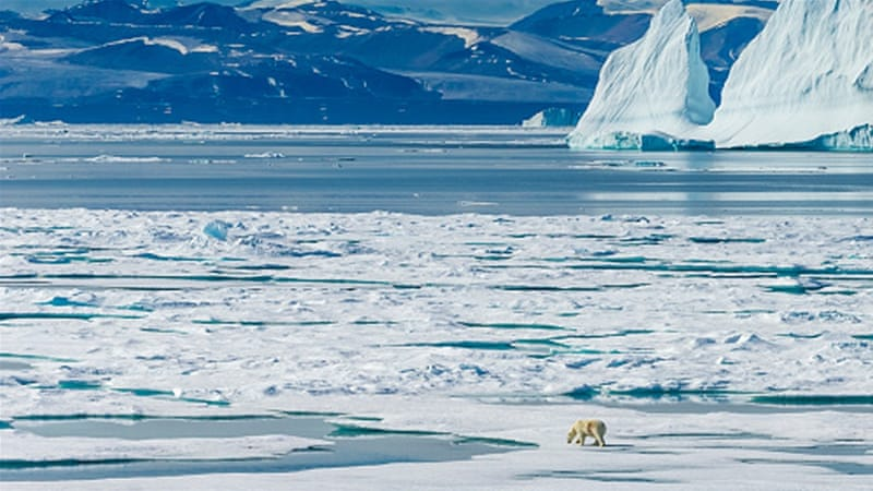 A polar bear wanders across the ice floes in the Canadian Arctic [Getty Images]