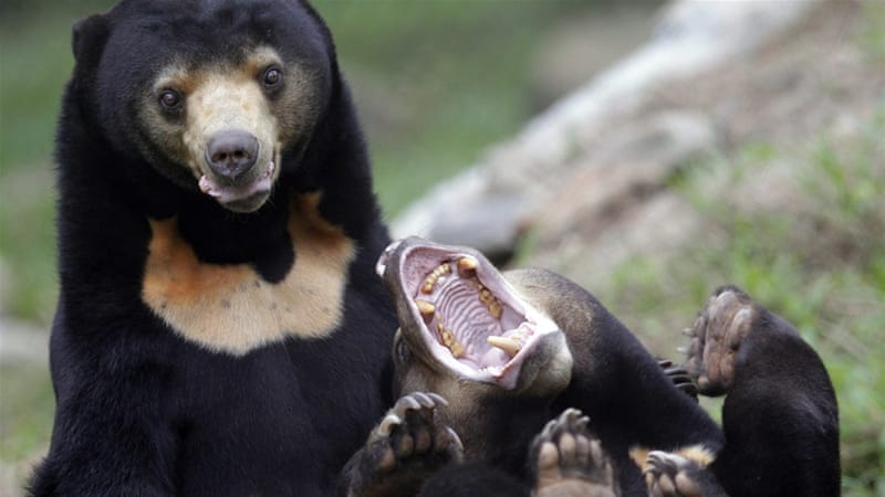 Online offerings range from rare birds to orangutans and sun bears [File: EPA]