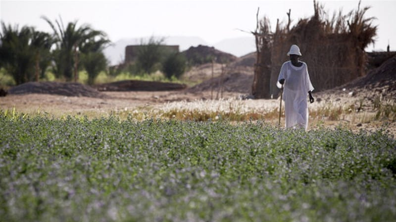 A Nubian farmer walks through irrigated fields near the village of Abu Simbel in upper Egypt. [Getty]