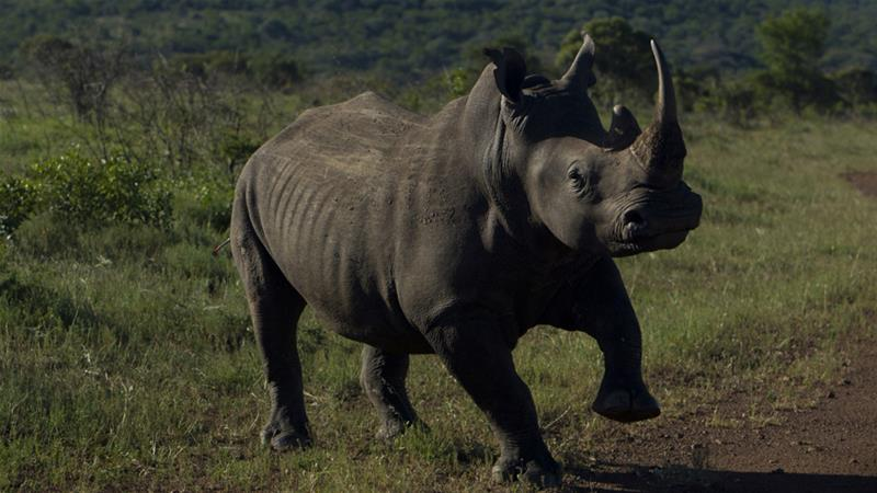 Who is gaining from illegal wildlife trade?