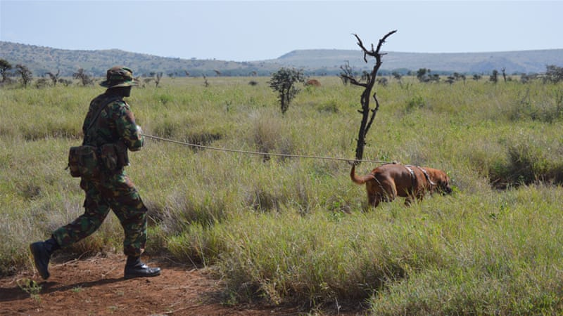 A ranger with a bloodhound on an exercise searches for poachers [Courtesy: Lewa Wildlife Conservancy]