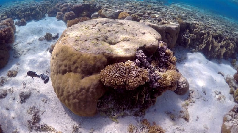 Third of coral reefs disappear