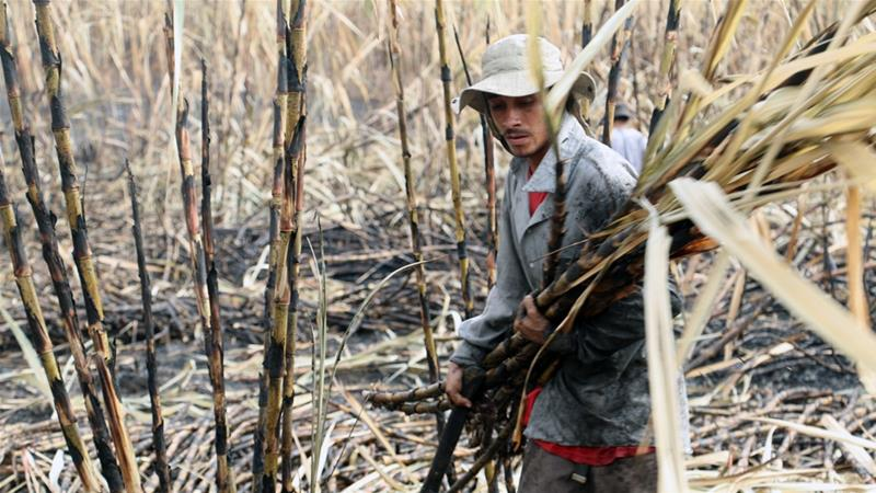 El Salvador's sugarcane workers and their silent killer