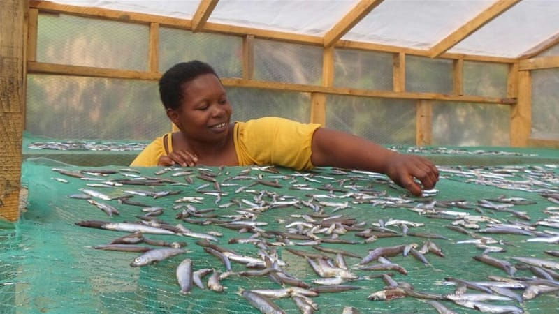 Fishing communities in Malawi are getting higher prices for their dried fish thanks to simple solar  sc 1 st  Al Jazeera & Low-tech solar tent boosts Malawiu0027s dried fish industry | News ...