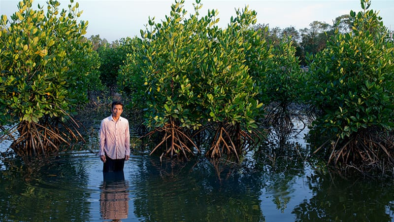 Image result for Mangroves