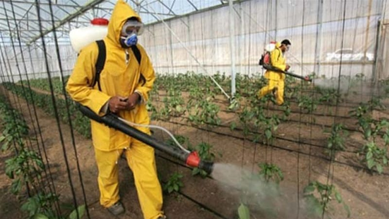 UN: 200,000 die each year from pesticide poisoning | News