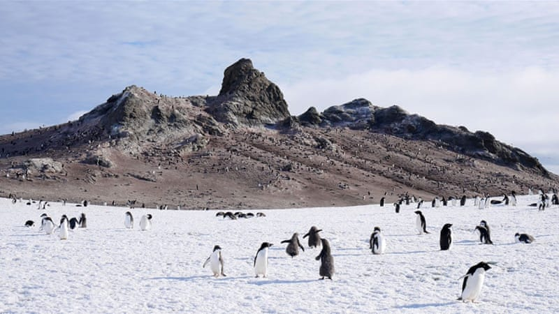 Discover the wildlife of Antarctica