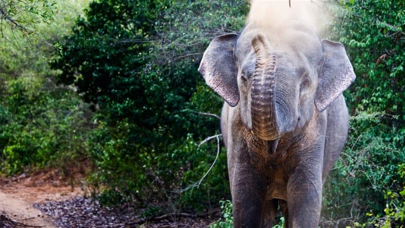 Elephants on \'hostile territory\' in Sri Lanka