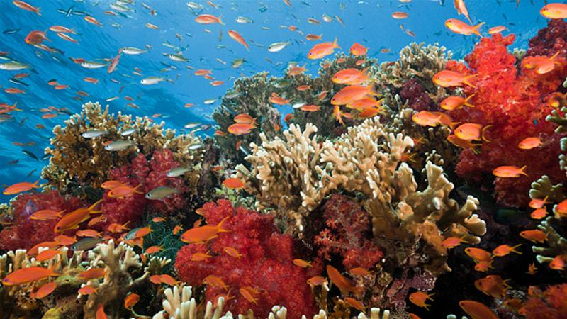 Coral reefs in Fiji support the livelihoods of many islanders [Reinhard Dirscherl/ullstein bild via Getty Images]