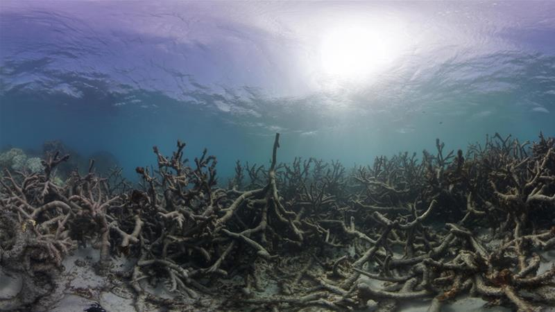 Dead coral is seen at Lizard Island, Great Barrier Reef in May 2016 [File: The Ocean Agency / XL Catlin Seaview Survey/Richard Vevers]