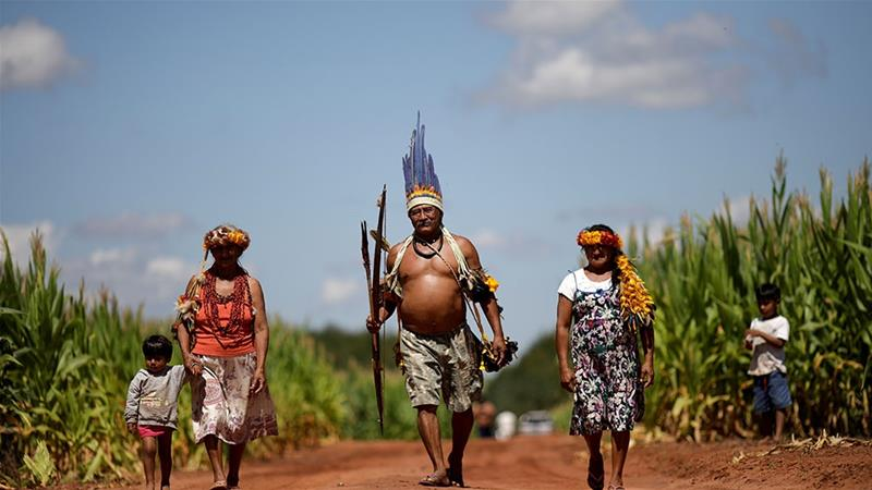 The head of the Uirapuru indigenous community walks along a corn field near the town of Conquista do Oeste, Brazil [File: Ueslei Marcelino/Reuters]