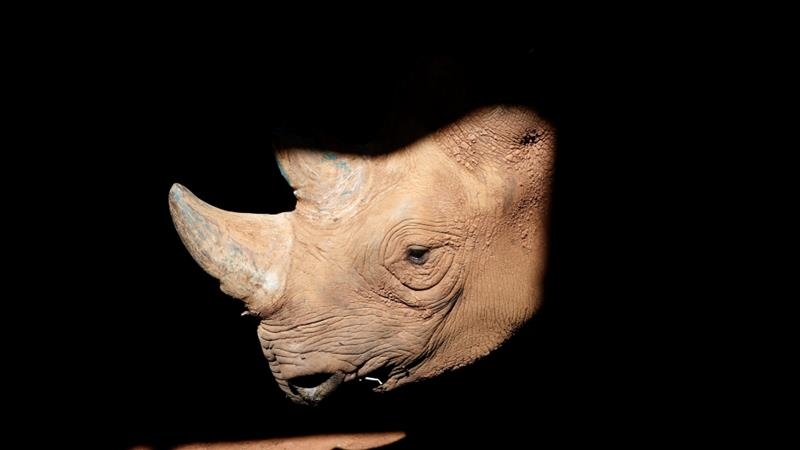 About 30,000 rhinos remain in the wild globally, according to Save The Rhino [Baz Ratner/Reuters]
