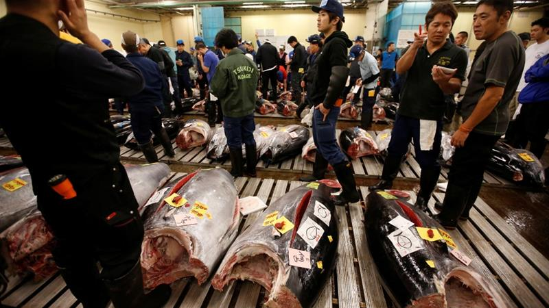 On Saturday, Tsukiji held its last auction, with a 162kg tuna being the most expensive fish of the day [Issei Kato/Reuters]