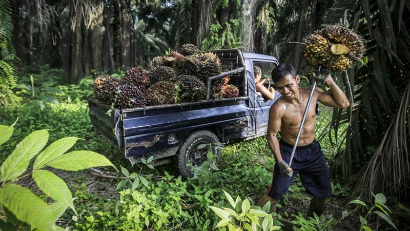 Indonesia and Malaysia produce more than 85 percent of the global supply of palm oil [EPA]