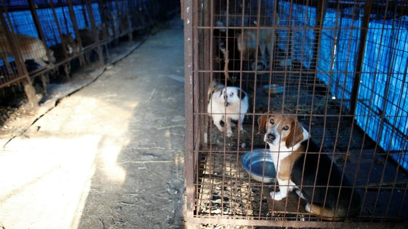 South Korea closes biggest dog slaughterhouse complex ... - photo#44