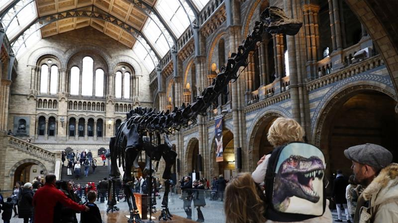 London's Natural History Museum houses specimens from around the world [Stefan Wemuth/Reuters]