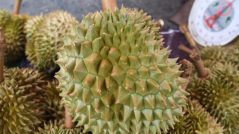 Durian fruit's odor is described by some as similar to dirty socks and vomit [Artur Widak/Getty Images]
