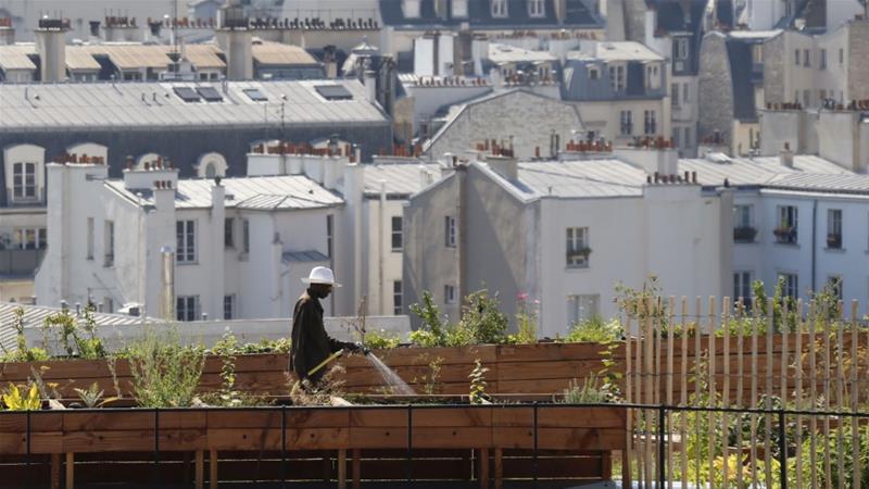 A man waters vegetable crops on a rooftop in Paris, France [Regis Duvignau/Reuters]