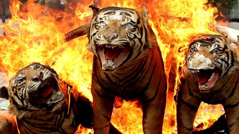how it helps preserve indonesia s wildlife news al jazeera
