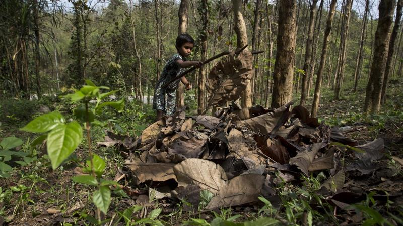 Sangeeta Das, 6, collects dried leaves that her mother will use as cooking fuel from a forest area in Gauhati, India, on  April 22, 2018 [AP]