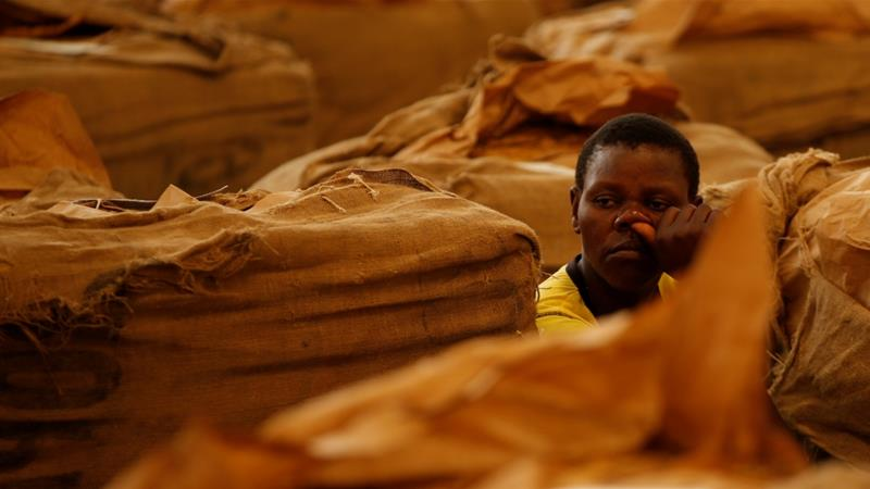 Workers await the start of the marketing season at Tobacco Sales Floor in Harare [Philimon Bulawayo/Reuters]