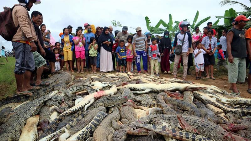 Mob slaughters hundreds of crocodiles after man killed entering breeding pond