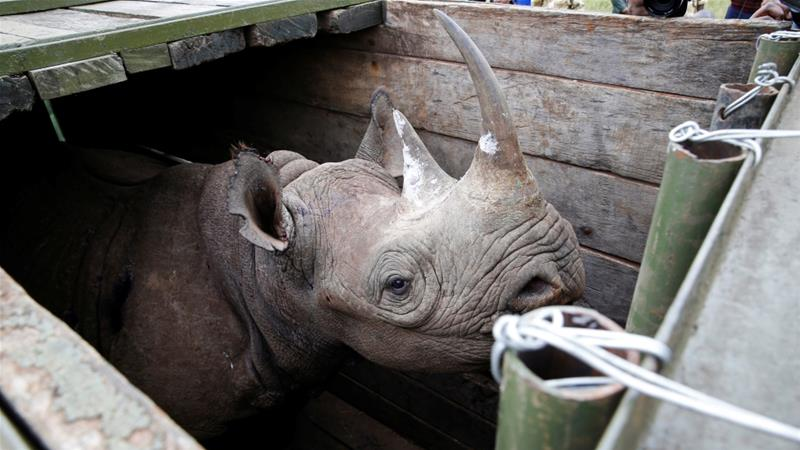 Authorities say the Kenya Wildlife Service will not take part in the inquiry to ensure its independence [Reuters]