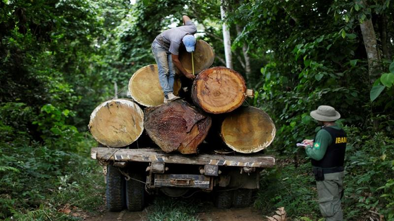 The Brazilian Institute of Environment and Renewable Natural Resources is tasked with policing the Amazon rainforest [File: Ueslei Marcelino/Reuters]