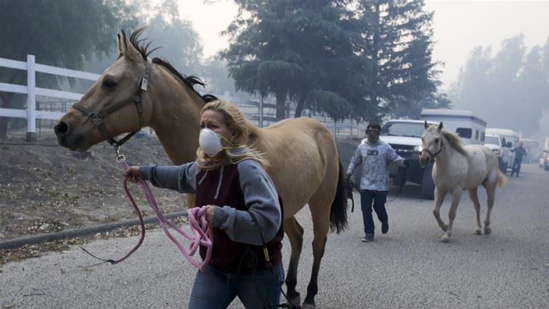Horses were evacuated from a ranch in Simi Valley as crews battled several firefighters in Southern California [Ringo HW Chiu/The Associated Press]