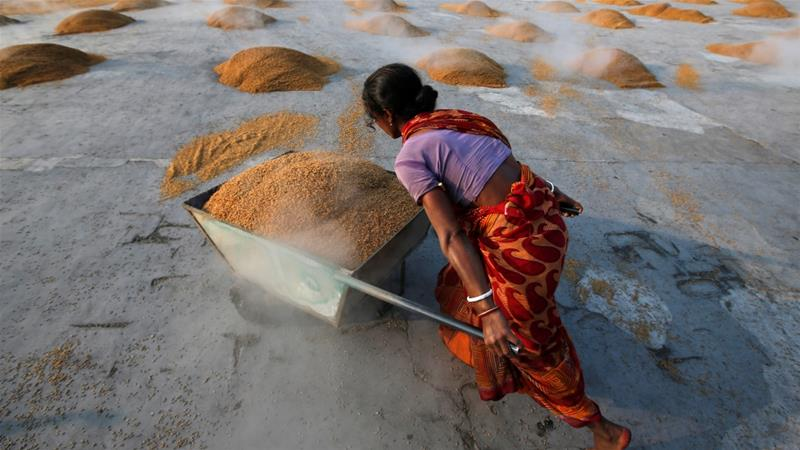 A worker carries boiled rice in a wheelbarrow to spread it for drying at a rice mill on the outskirts of Kolkata [File: Rupak De Chowdhuri/Reuters]