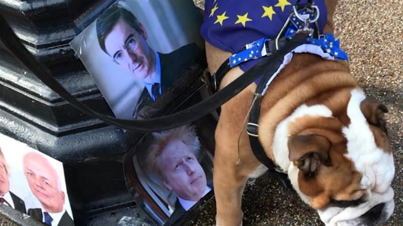 Chunky the bulldog was among the pets who attended a 'Wooferendum' march last year [Siobhan Goodchild/Al Jazeera]