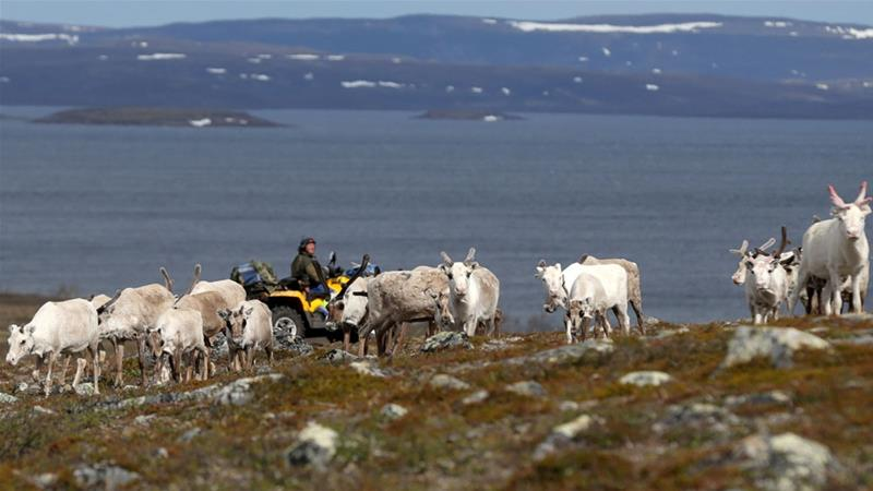 Sami reindeer herder Nils Mathis Sara drives his ATV as he follows a herd on Finnmark Plateau in Norway [Reuters/Stoyan Nenov]