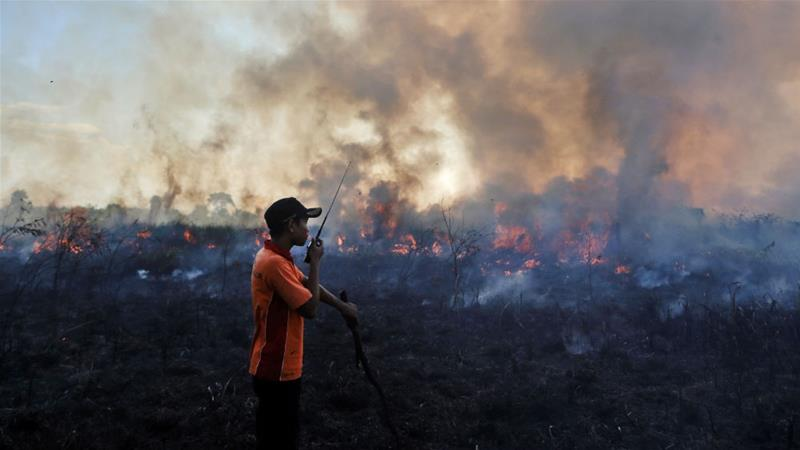 Peatland fires ravaged thousands of hectares of forest in Indonesia in 2015.  Despite the country's serious environmental problems, it is now an election issue [AP Photo]