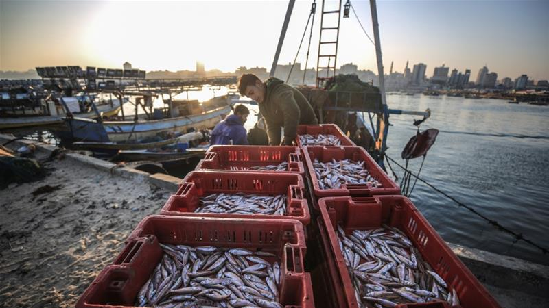 Palestinian fishermen put their catch of the day on the market at Gaza's port [File: Anadolu Agency]