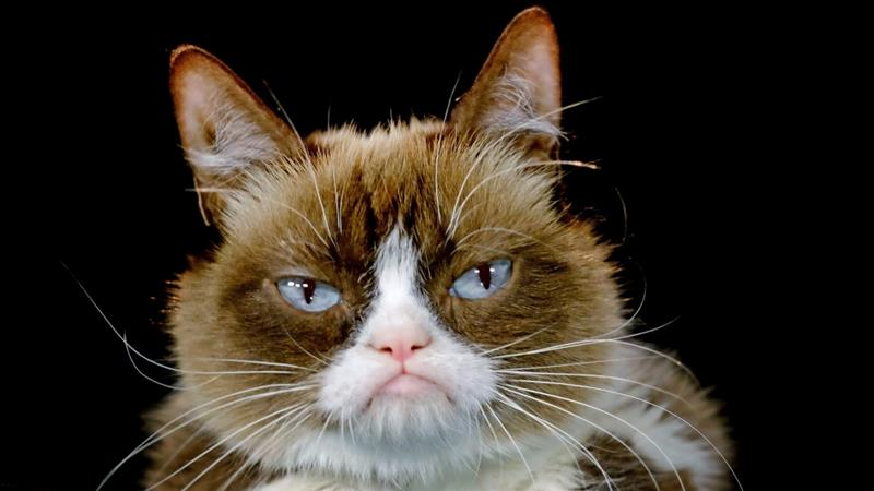 Grumpy Cat, whose real name was Tardar Sauce, rose to fame after her photos were posted on Reddit in 2012 [File: Richard Vogel/AP]