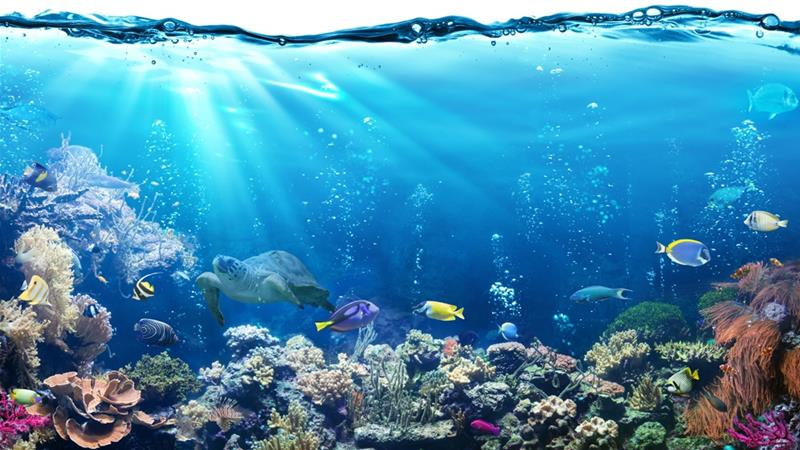 Marine life under threat as oxygen levels fall