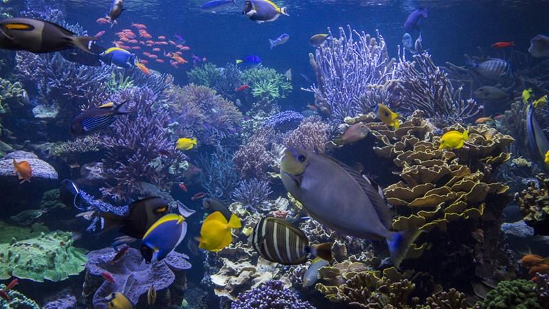 Climate change: Warming oceans may reduce sea life by 17%