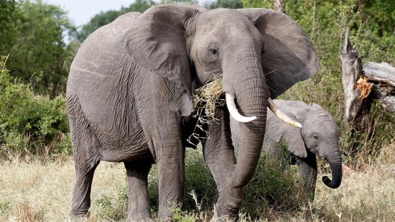 Elephant, rhino populations on the rise in Tanzania: Gov't