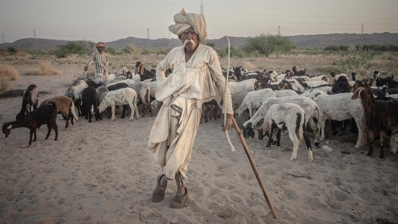 A Rabari man tends to his flock. Also called Rewari or Desai, Rabaris are nomadic cattle herders and shepherds from northwest India [Andrea de Franciscis/Al Jazeera]