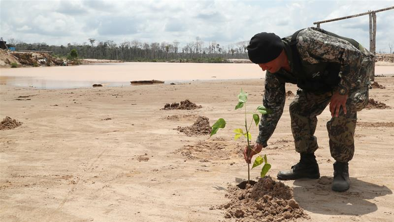 Planting More Trees Key to Combating Climate Change