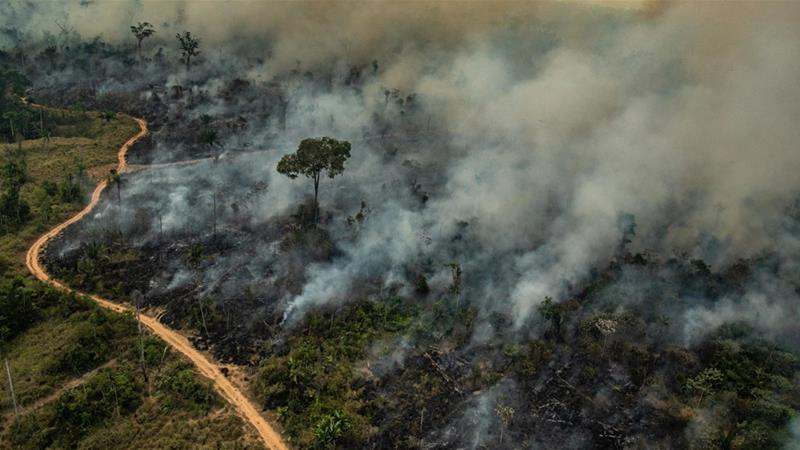 What triggered the Amazon fires?