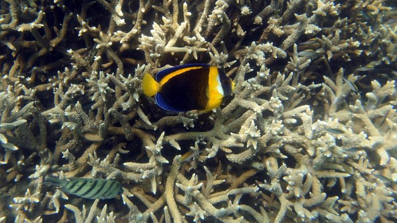 Australia downgrades Great Barrier Reef's outlook to