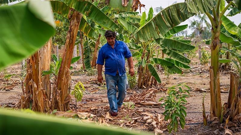 Ailson Basilia Guerra is one of the dozens of farmers in Rondonia supported by Rioterra [Mia Alberti/Al Jazeera]