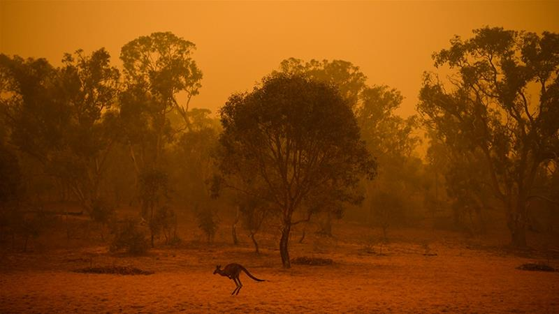 A kangaroo is seen in bushland surrounded by smoke haze early morning in Canberra, Australia in January this year. This month, a royal commission of inquiry was opened into the fires [EPA]