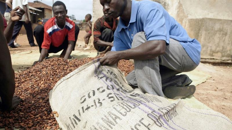 Local farmers gather dried cocoa beans to be weighed before selling them to merchants in a village outside of Kumasi, Ghana, the world's second-largest exporter of the cocoa bean [File: Jane Hahn/Bloomberg]
