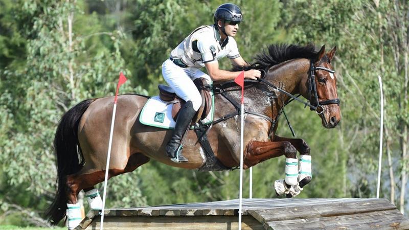 Image result for azad kashmir horse