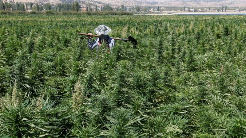 Lebanon set to legalise medical, industrial cannabis cultivation